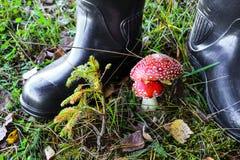 森林查出的蘑菇白色 图库摄影