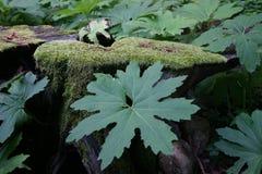 森林树桩 库存照片