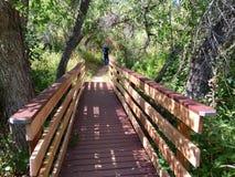 森林桥梁 库存图片