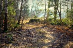 森林梦想 图库摄影