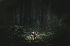 森林梦想 免版税库存照片