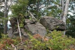 森林植物群落围拢的火山岩 免版税库存图片