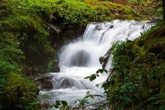 森林植被赛跑围拢的小河瀑布 库存图片