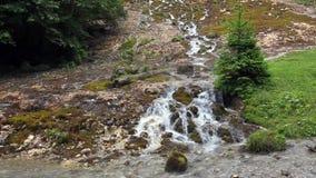 森林植被围拢的小河瀑布 股票录像
