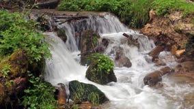森林植被围拢的小河瀑布 股票视频