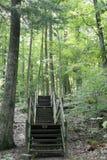 森林楼梯 图库摄影