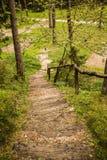 森林楼梯 免版税库存照片