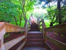 森林楼梯fundy国家公园 库存照片
