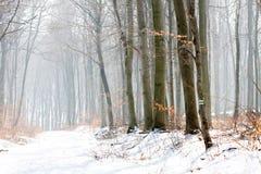 森林横向冬天 免版税库存照片