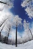 森林横向冬天 库存图片
