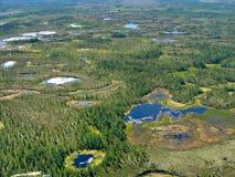 森林横向寒带草原 免版税库存照片