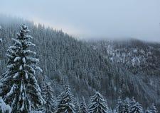 森林横向山冬天 免版税库存照片