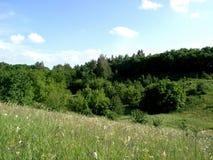 森林横向干草原 库存照片