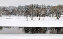 森林横向杉木河冬天 库存图片