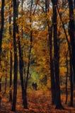 森林横向油画河 秋天划分为的横向留下公园路黄色 免版税库存照片