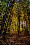 森林横向油画河 秋天划分为的横向留下公园路黄色 库存照片
