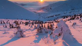 森林横向雪冬天 与雪盖的许多松树的小山 影视素材