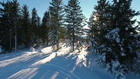 森林横向雪冬天 鸟瞰图飞过 庄严雪山 旅游业手段自然 股票视频