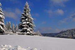 森林横向雪冬天 库存照片