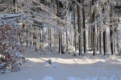 森林横向雪冬天 库存图片