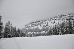 森林横向雪冬天 图库摄影
