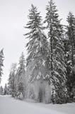 森林横向雪冬天 免版税库存照片