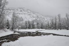 森林横向雪冬天 免版税图库摄影