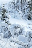 森林横向雪冬天 免版税库存图片