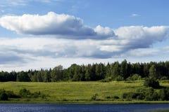 森林横向 图库摄影