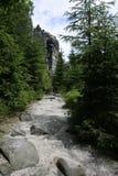 森林横向 免版税图库摄影