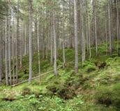 森林横向 库存照片