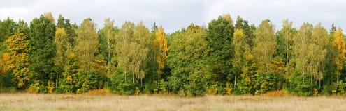 森林横幅背景 免版税库存图片