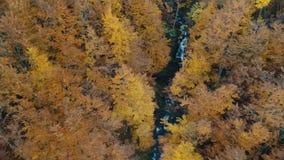 森林橙树包围的起泡沫的山河 股票录像