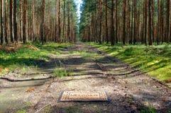 森林欢迎我们 库存照片
