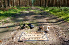 森林欢迎我们 免版税库存照片