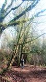 森林步行 免版税库存照片