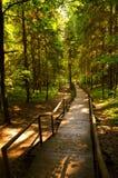 森林步行 库存图片
