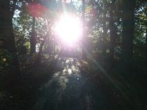 森林段落 库存图片