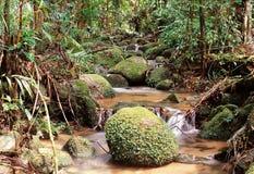 森林水 免版税库存照片