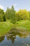 森林池塘在一个晴天 库存图片