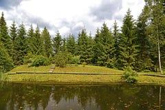 森林池塘 图库摄影
