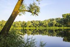 森林池塘 免版税库存图片