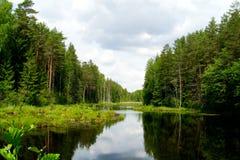 森林池塘 库存图片