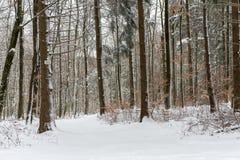 森林没有叶子和很多雪的冬天 免版税库存照片