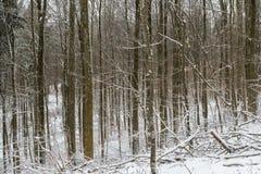 森林没有leafes和很多雪的冬天 图库摄影