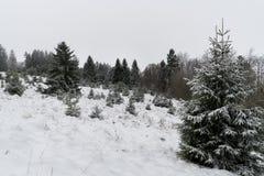 森林没有leafes和很多雪的冬天 免版税库存图片
