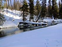 森林河及早在冬天 图库摄影