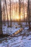 森林河反射 免版税库存图片