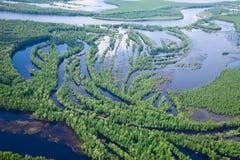 森林河在夏天,顶视图 免版税图库摄影