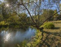 森林河在秋天森林里 免版税库存图片